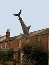 Headington Shark Oxford